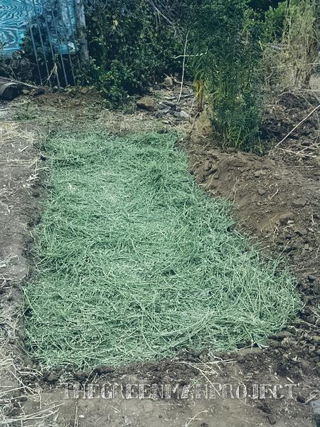 dug in about six inches, loosened the soil and added some alfalfa from a bale for good measure