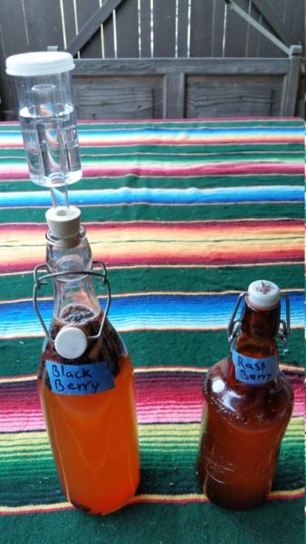 Bottled Kombucha with airlock