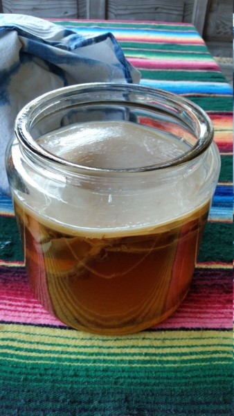 Kombucha SCOBY with tea in jar