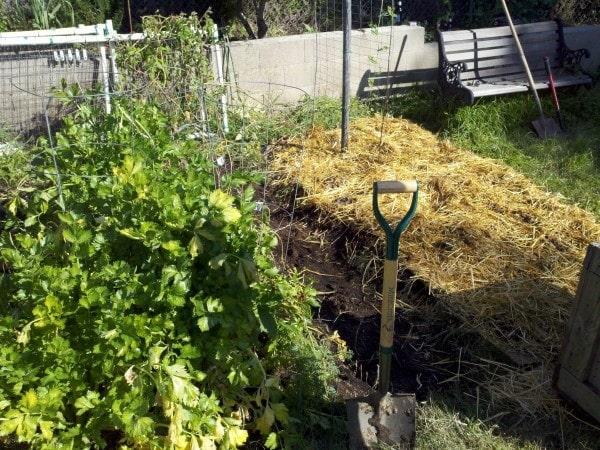 Lasagna garden straw layer