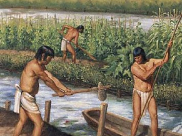 Mayan agriculture