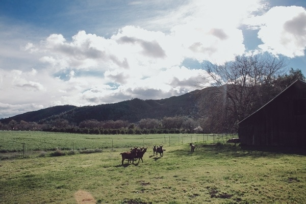 Spreadwing farm