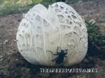 Scleroderma Citrinum large strange mushroom