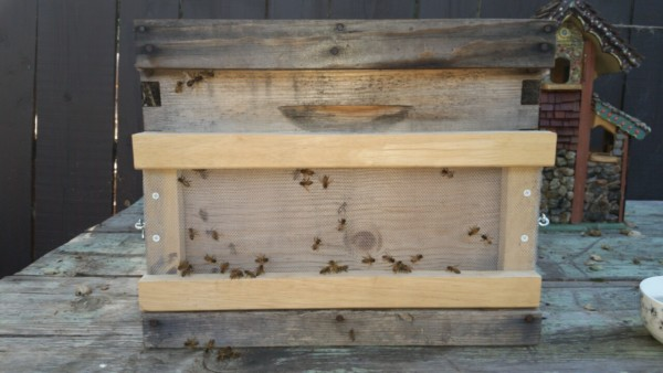Bee keeping - Hive robber screen - The Greenman Project