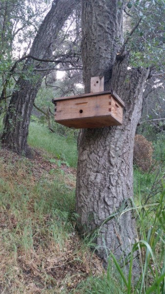 Bee keeping - Swarm catcher - The Greenman Project